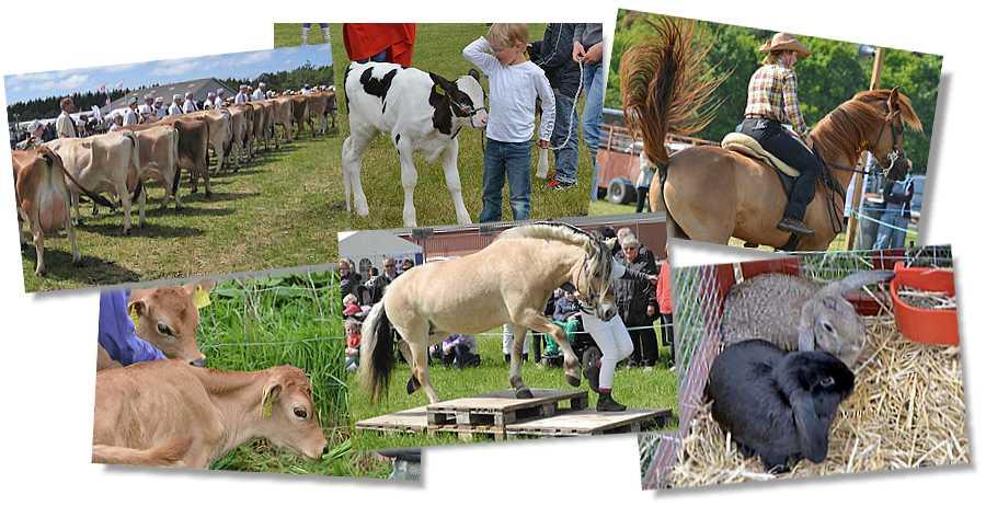 Der sker meget på Lemvig marked og dyrskue